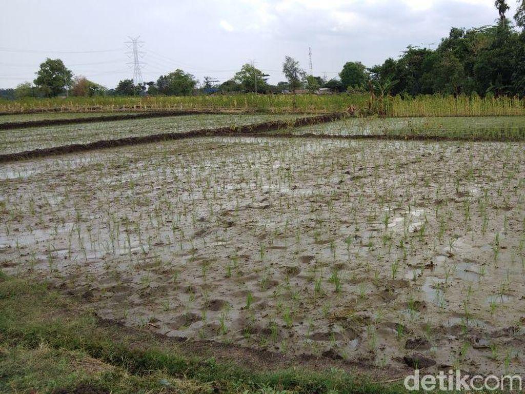Musim Tanam, Petani Probolinggo Dapat Tambahan Pupuk Bersubsidi