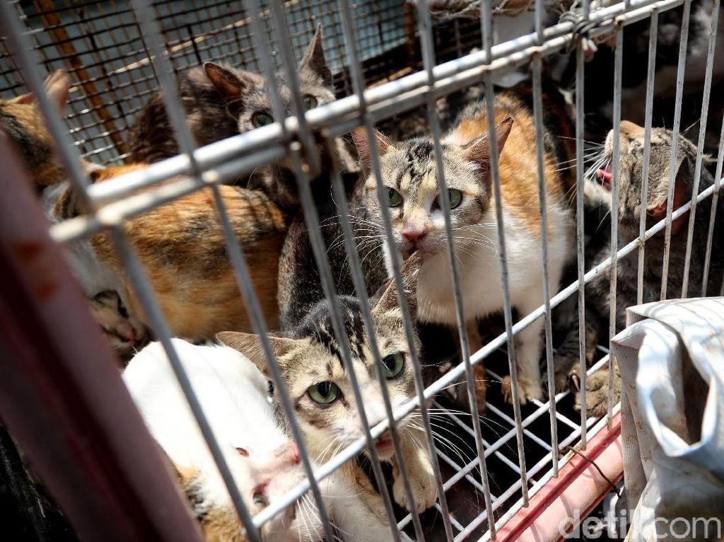 Razia Kucing Liar di Rusun Baladewa