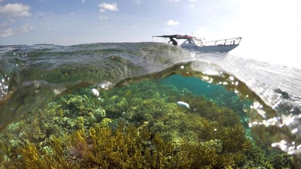 Destinasi Melihat Lumba-lumba Liar di Indonesia