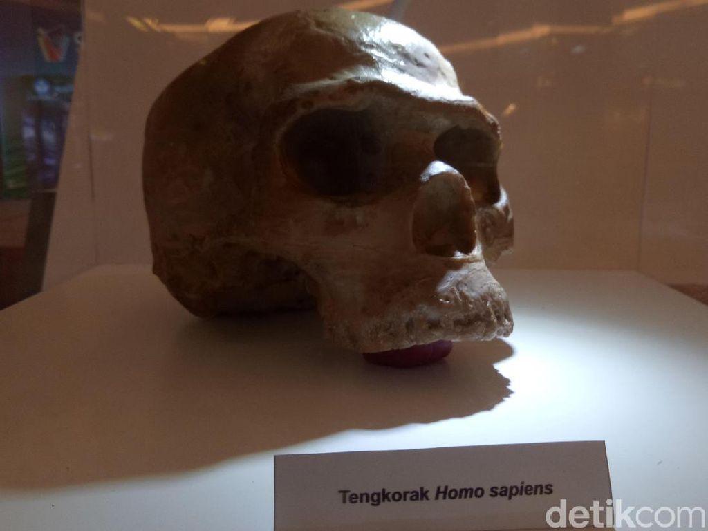 Mal di Palembang Ini Dipenuhi Fosil dan Manusia Purba
