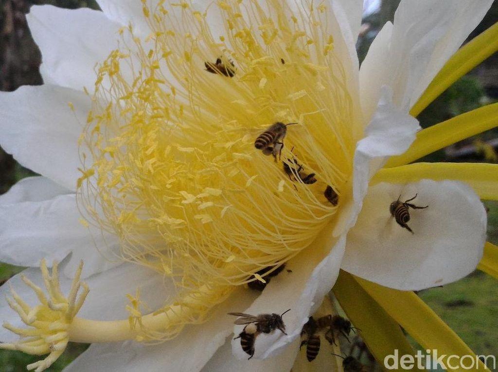 Tentang Lebah: Disebut di Al Quran, Jadi Google Doodle di Hari Bumi