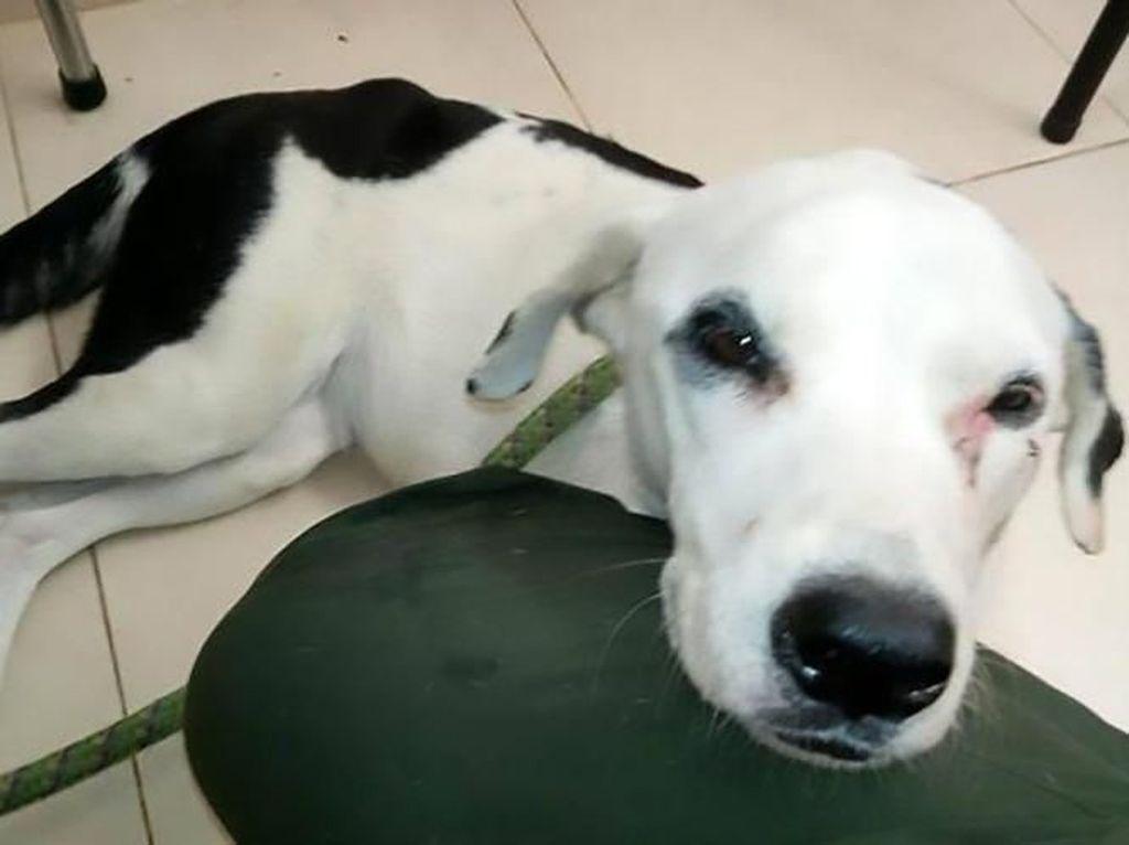 Heboh Klinik Hewan di Pluit yang Telantarkan Anjing sampai Tewas