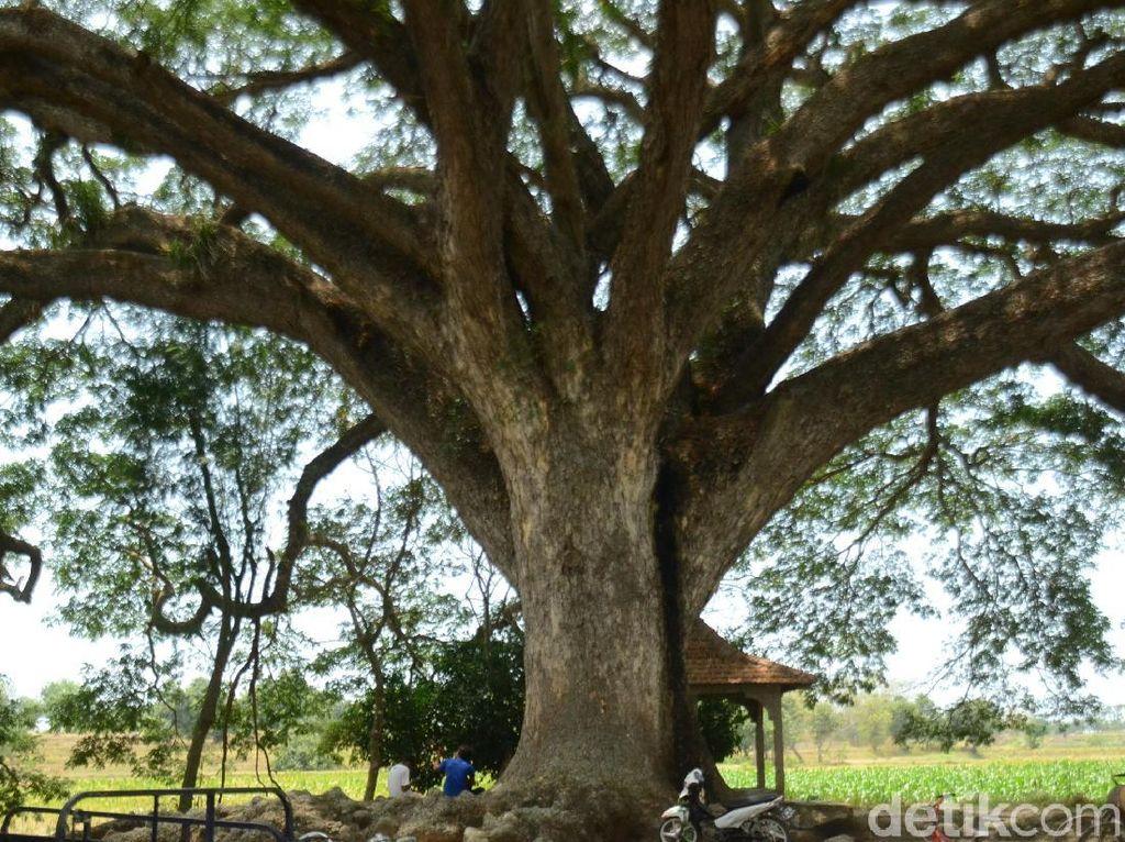 Bisakah Biji di Perut Jenazah Tumbuh Jadi Pohon?