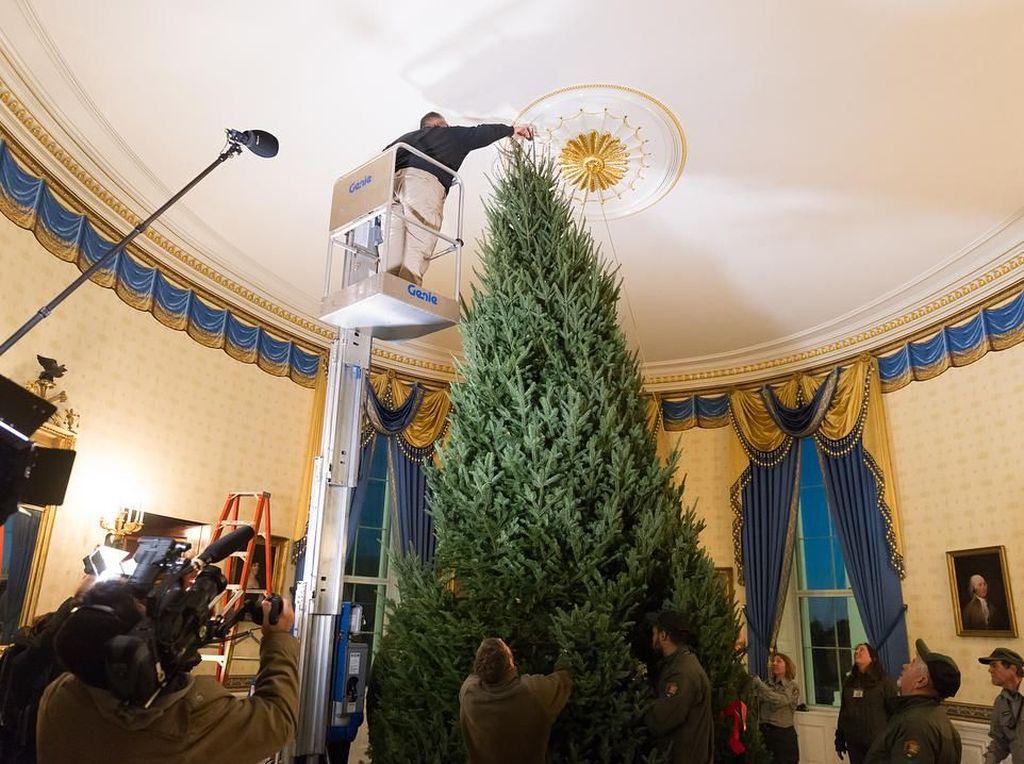 Pohon Natal yang Mulai Dipasang di Gedung Putih