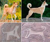 Temuan Ini Ungkap Gambar Anjing Pertama di Dunia