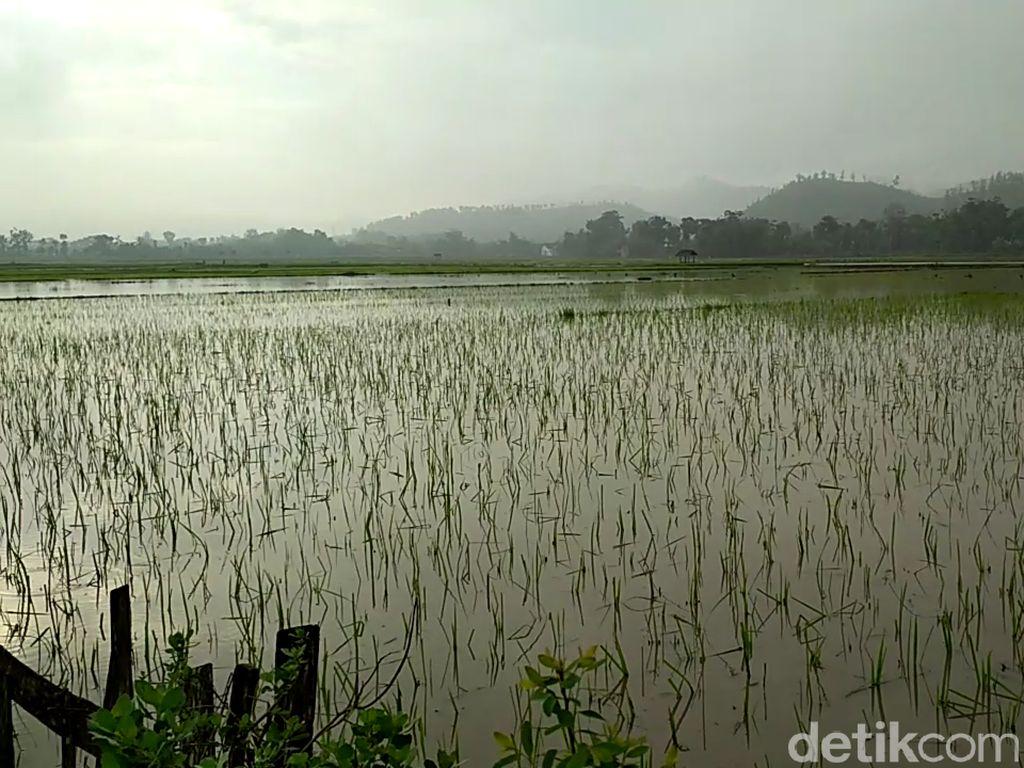 40.000 Hektar Sawah Terendam Banjir Tahun Lalu