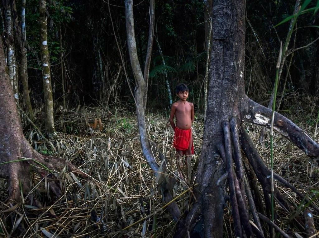 Hidup di Hutan Ribuan Tahun, Masyarakat Adat Amazon Tidak Ganggu Spesies