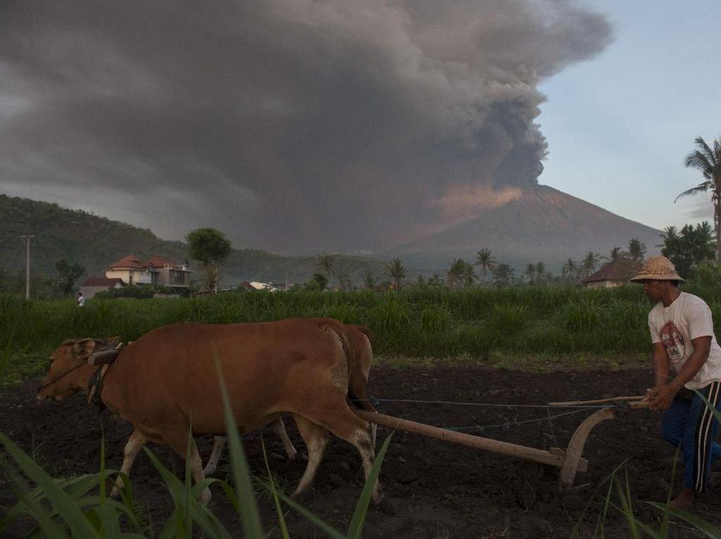 Foto: Warga Masih Beraktivitas Saat Gunung Agung Meletus