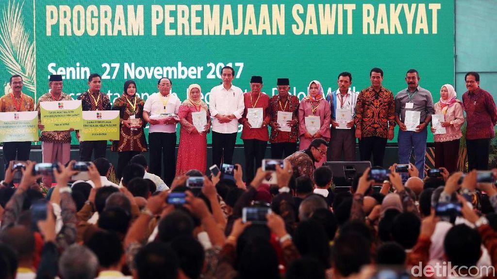 Jokowi Bertemu Petani Sawit di Sumut