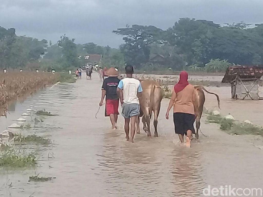 Takut Ternaknya Hilang, Pengungsi Banjir Ponorogo Nekat Pulang