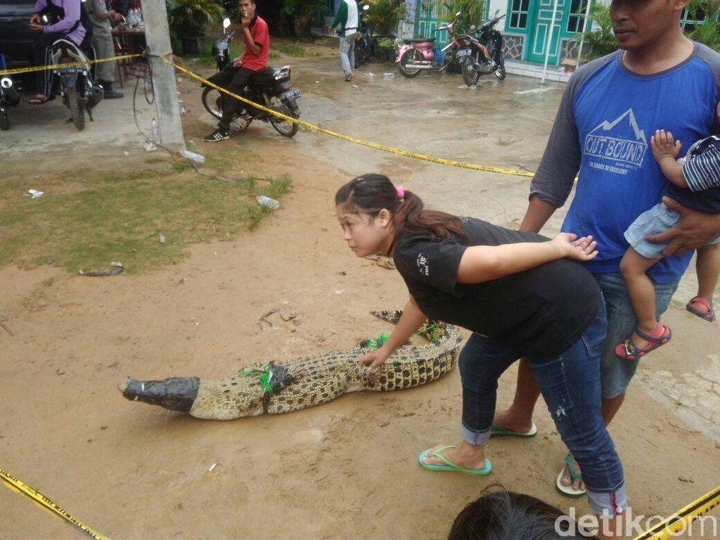 Foto: Buaya Ditangkap di Sleman, Kakinya Diikat ke Belakang