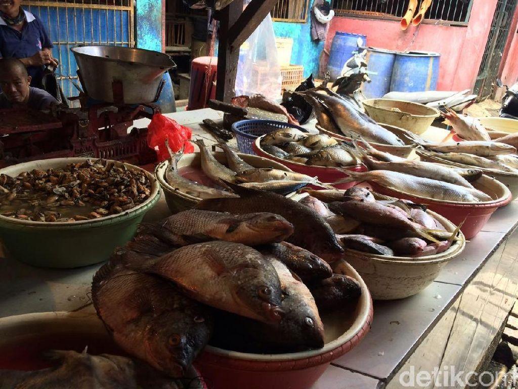 Harga Ikan Kembung Naik Jadi Rp 35 Ribu/Kg, Ini Penyebabnya