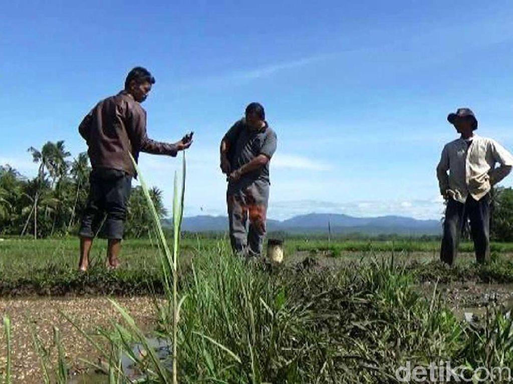Penemuan Cadangan Gas di Sumur Eksplorasi West Penyu Sulteng