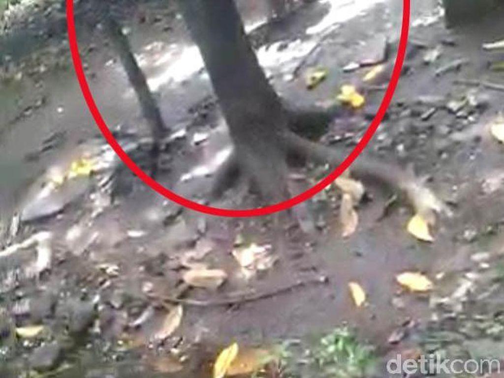 LPA Kecam Aksi Kakek di Pasuruan yang Umpankan Cucunya ke Monyet