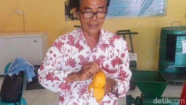 Mengupas mangga seperti mengupas buah pisang.