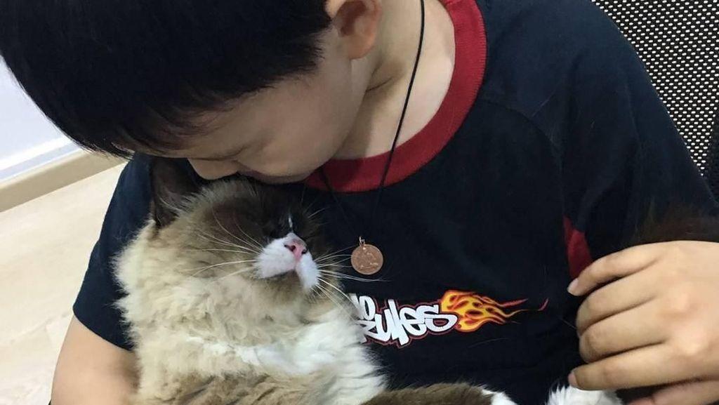 Potret Ketika Kucing Menjadi Terapis Berikan Kenyamanan Mental