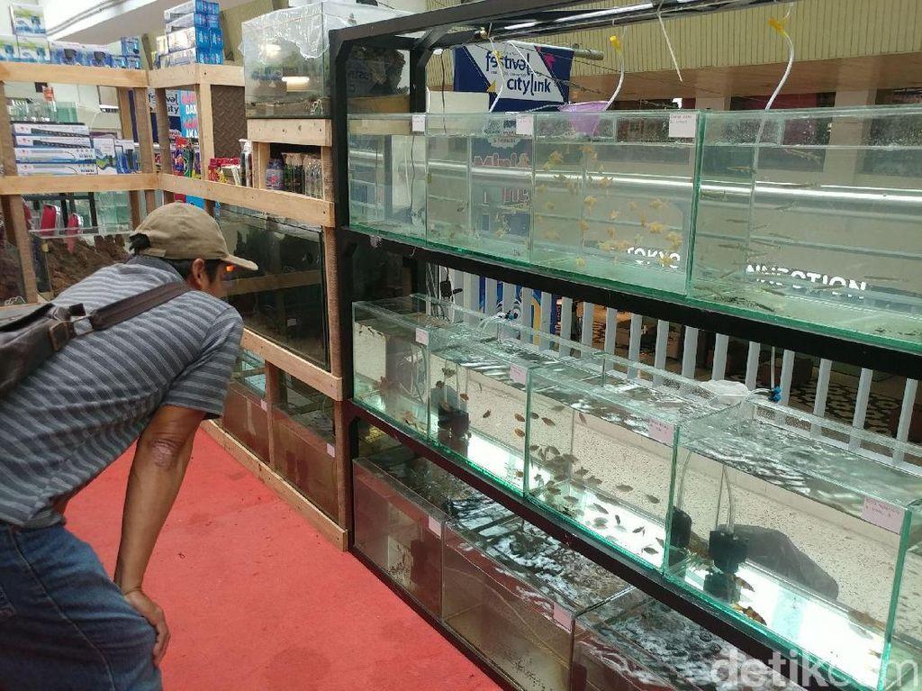 Ikan Hias Diproduksi di RI, Tapi Pasarnya Dikuasai Singapura