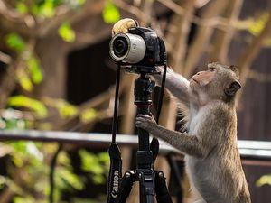 Tingkah Hewan 'Berprofesi' Fotografer Bikin Ngakak