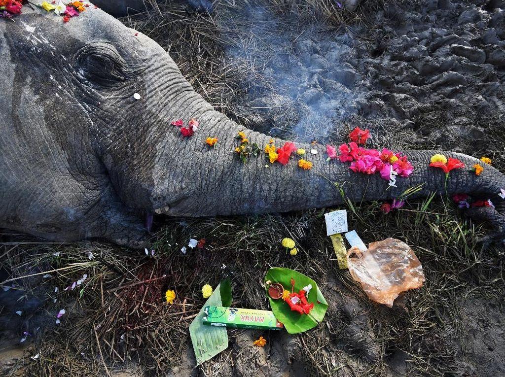 Foto: Haru Pemakaman 2 Gajah di India yang Mati Disetrum