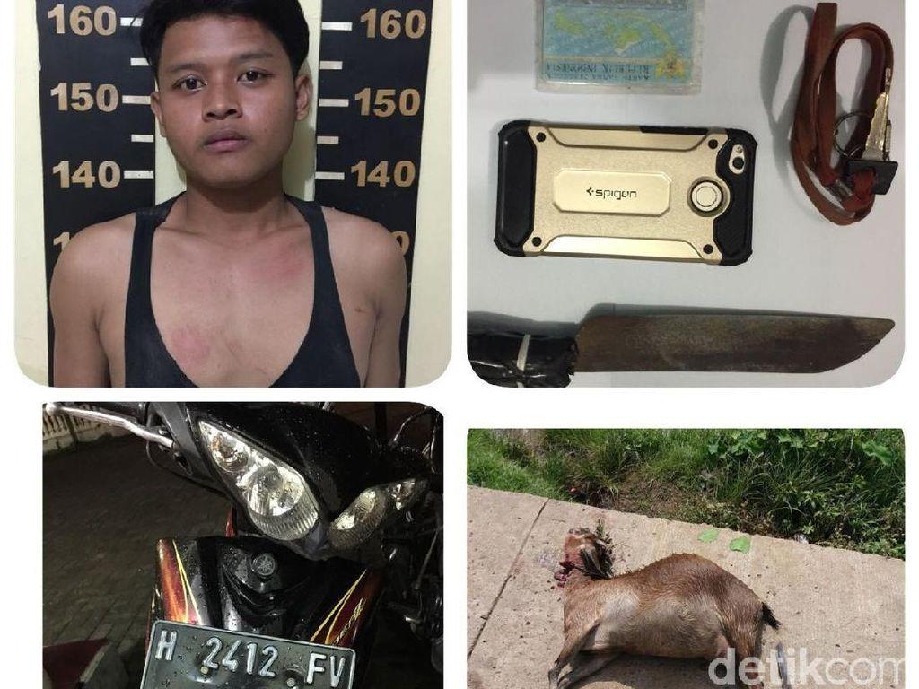 Curi Kambing di Tengah Sawah, Restu Ditangkap di Tangerang