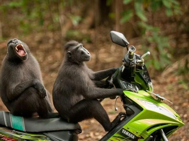 Bikin Ngakak, Jawara Kontes Foto Komedi Hewan