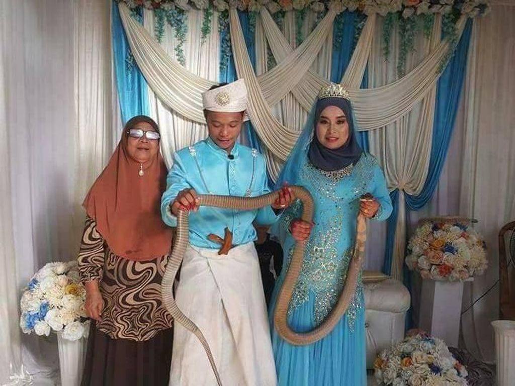 Ngeri! Pengantin Wanita Buat Persembahan dengan Ular Kobra di Pernikahannya