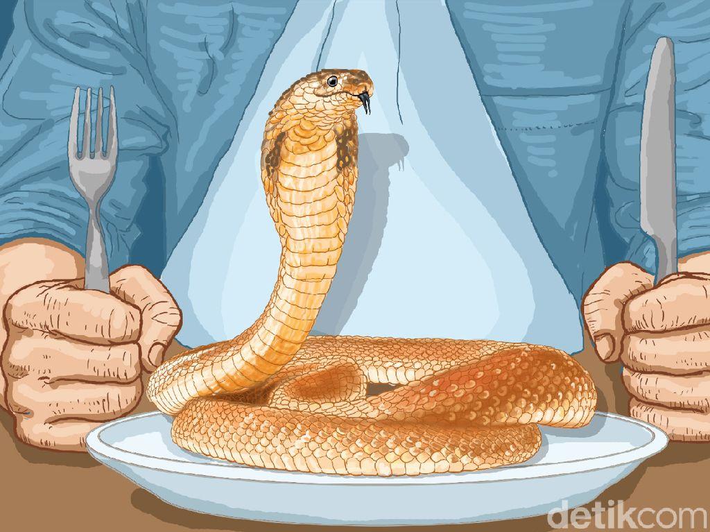 Sensasi Menenggak Darah Kobra