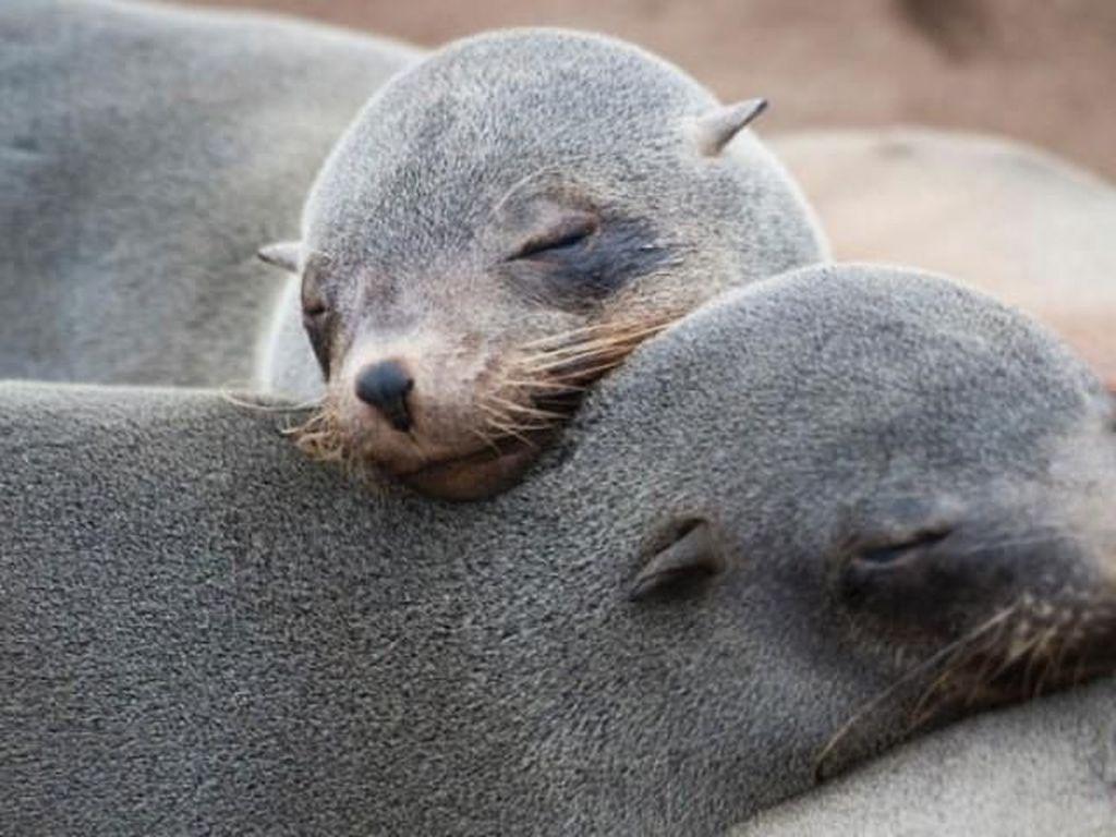 Haru! Pria Ini Selamatkan Anjing Laut yang Terbelit Jaring