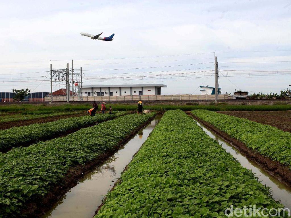 Melihat Semangat Petani di Soekarno-Hatta