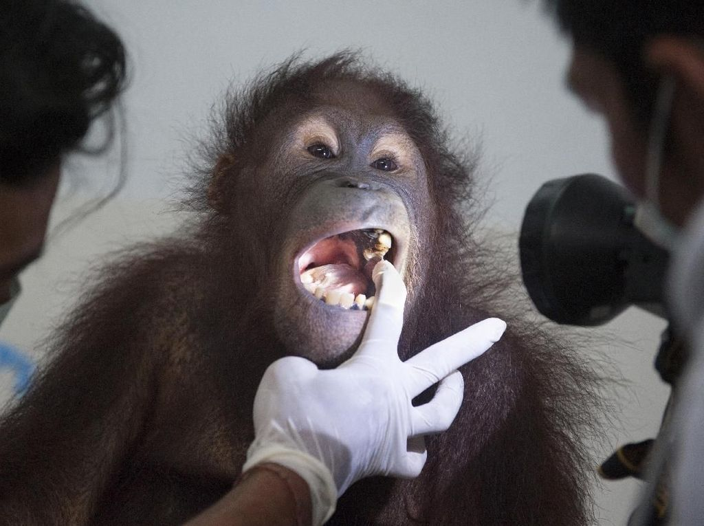 Ketika Dara Diperiksa Dokter Hewan