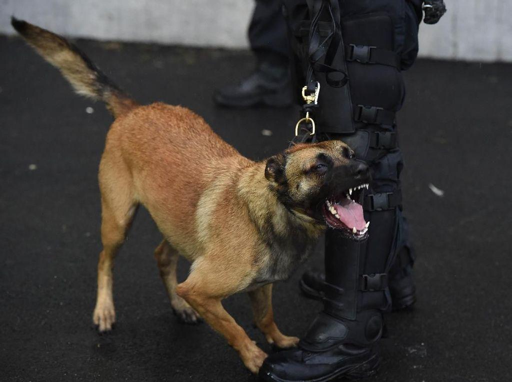 Anjing-anjing CIA