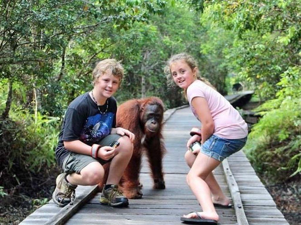 Para Yachter Dunia Akan Diajak Mengenal Orangutan dan Suku Dayak