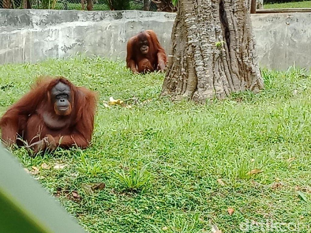 Foto: Taman Satwa Lembah Hijau, Tempat Liburan Awal Tahun di Lampung