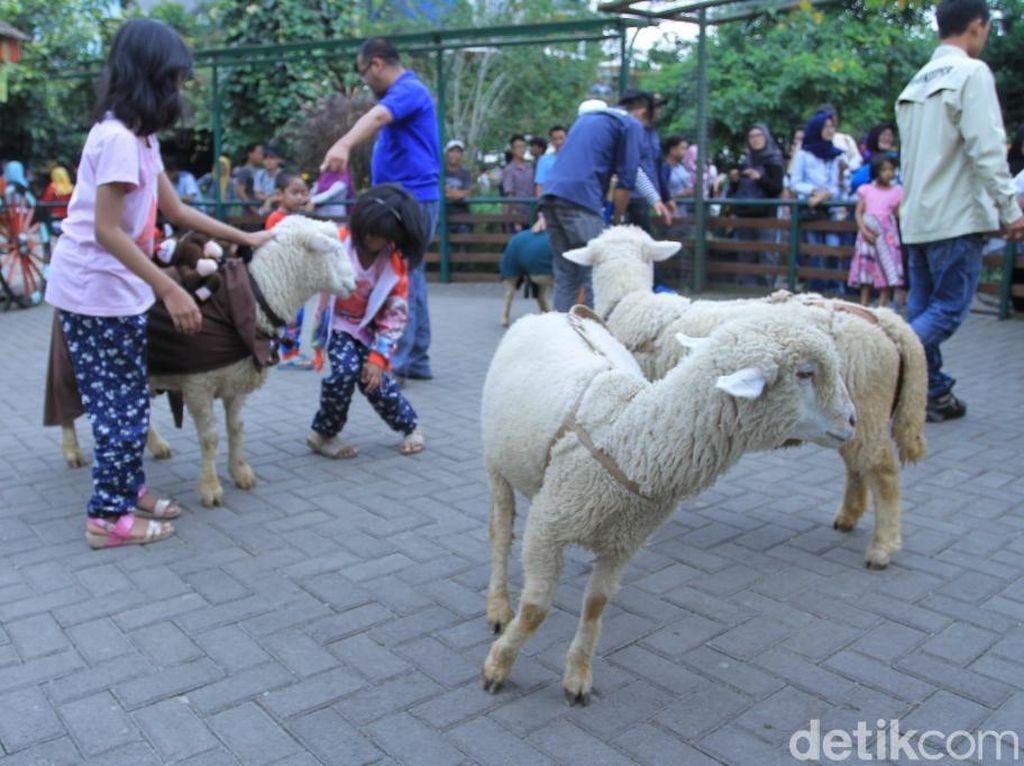 Ini Nih Kebun Binatang Mini di Lembang