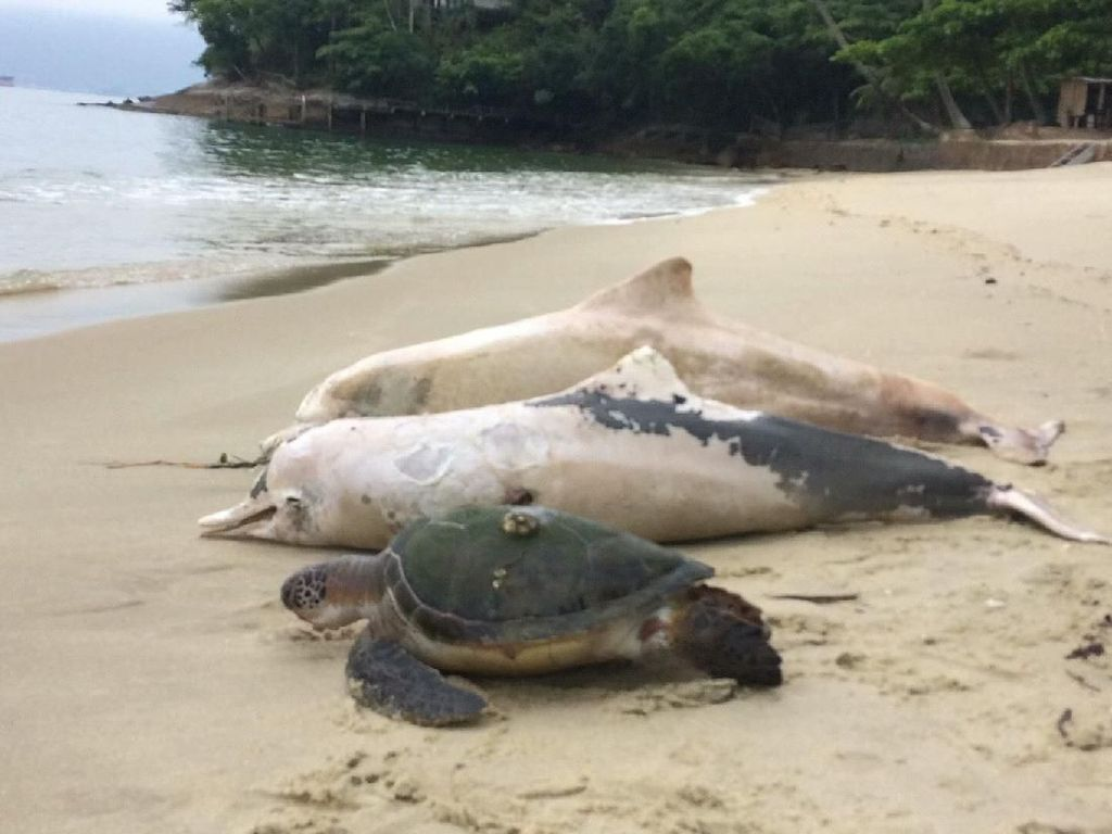Duh, 86 Lumba-lumba Ditemukan Mati di Lepas Pantai Mozambik