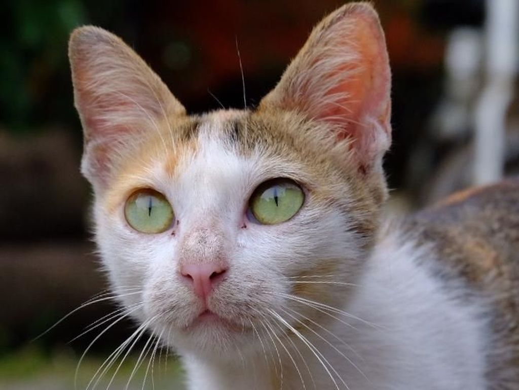 Abah Grandong Makan Kucing Hidup untuk Show Off, Indikasi Gangguan Jiwa?