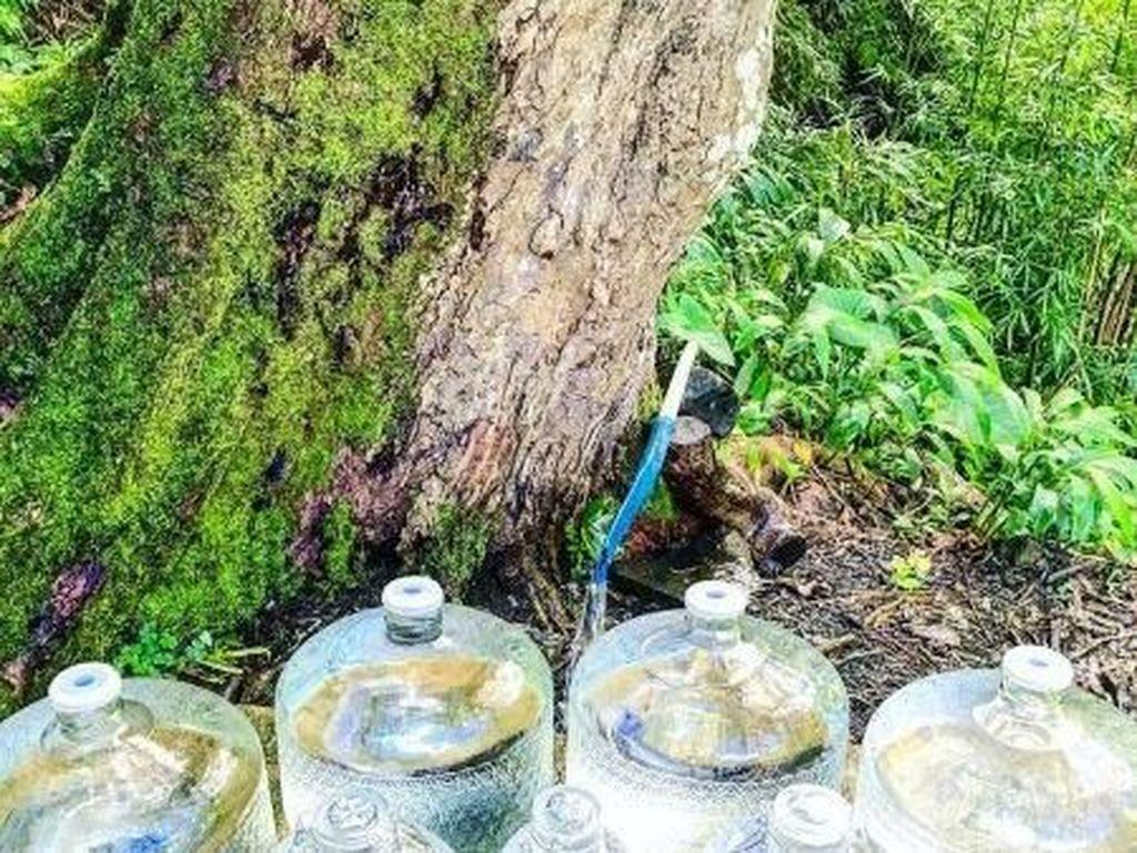 Tren Kesehatan Baru yang Berbahaya: Minum Air Alami Mentah