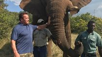 Ketika Terminator Dikejar Gajah di Afrika