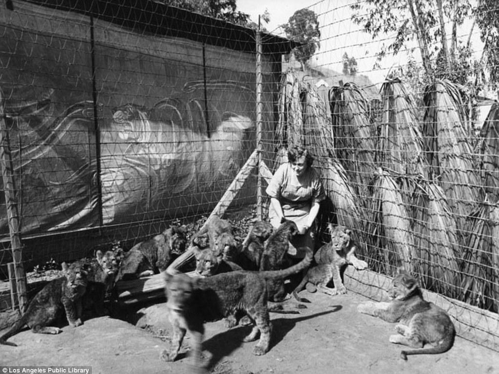 Foto Hitam Putih, Pelatihan Singa Tahun 1920-an