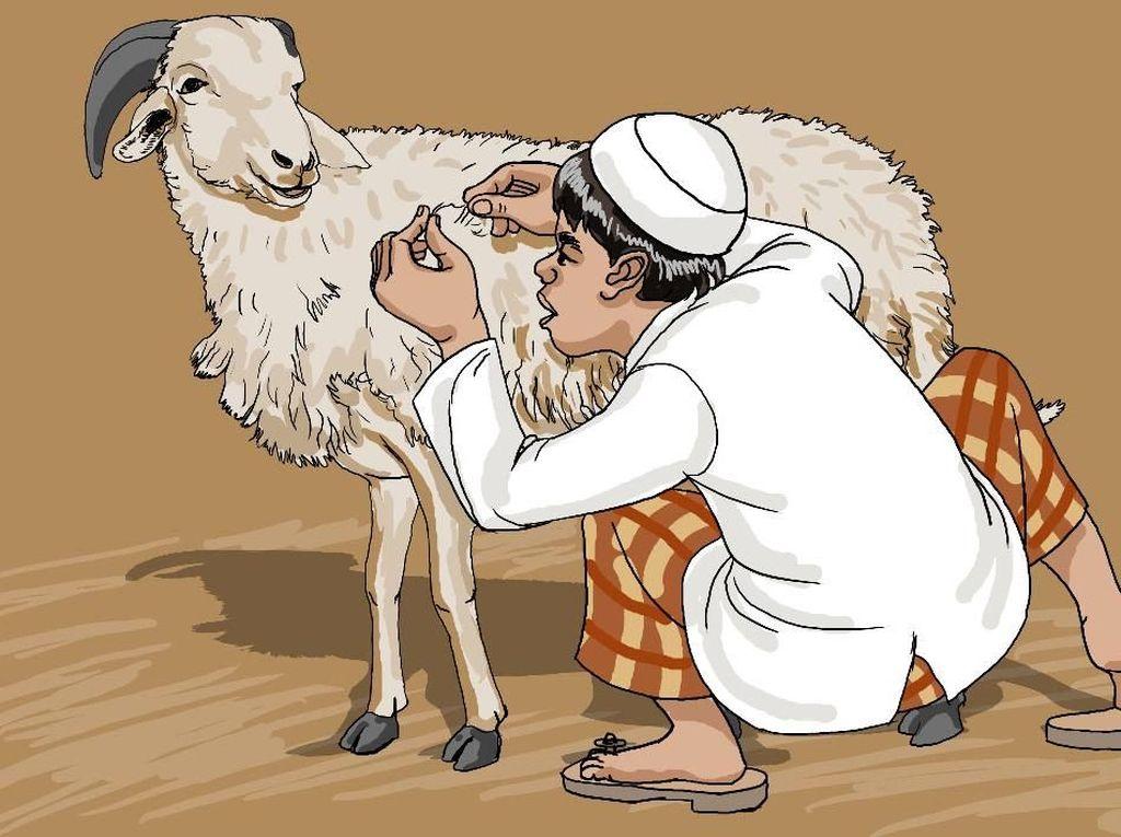 Menghitung Bulu Domba