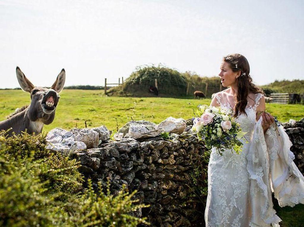 Aksi Hewan dalam Foto Pernikahan Bikin Gemas