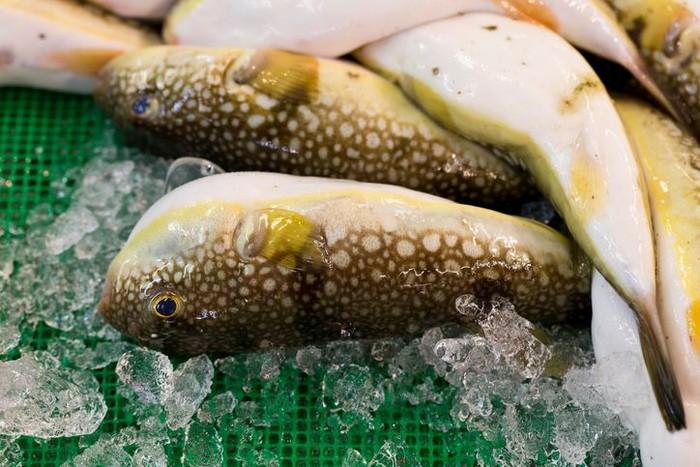 5 Paket Ikan Fugu Beracun Terlanjur Terjual, Pemerintah Jepang...