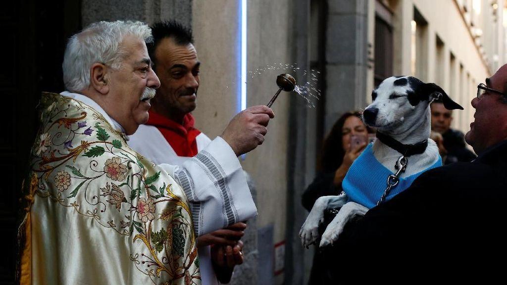Foto: Tradisi Unik Pembaptisan Hewan di Gereja Spanyol