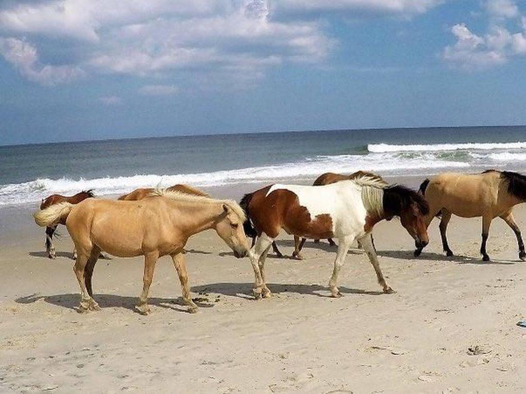 Potret Pantai yang Punya Ratusan Kuda