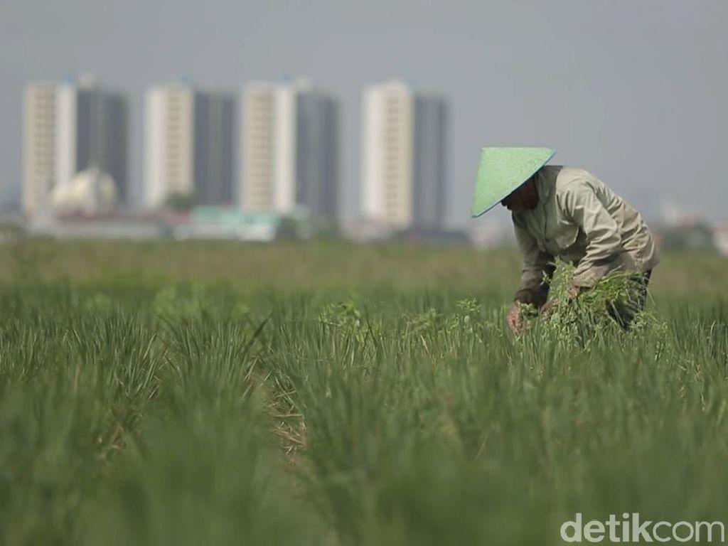Jokowi Siapkan Perpres Cegah Alih Fungsi Sawah