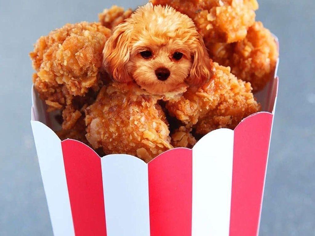 Ah, Lucunya! Anjing-anjing Ini Menyelip dalam Bentuk Makanan