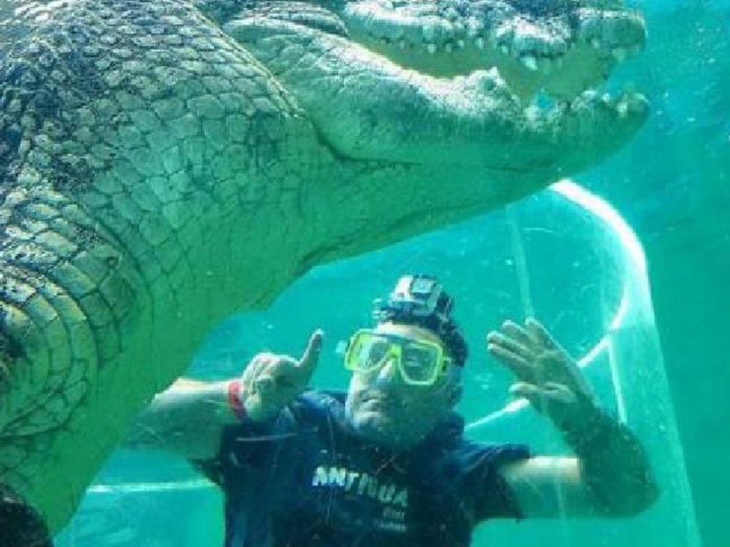 Berenang Bareng Buaya, Alat Vital Pria Ini Tidak Sengaja Tampak
