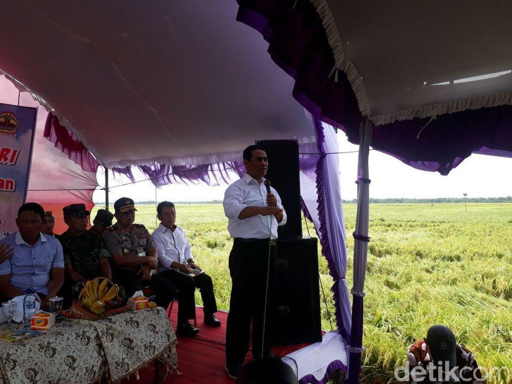 Mentan: 300.000 Hektar Sawah di Jateng Panen Februari