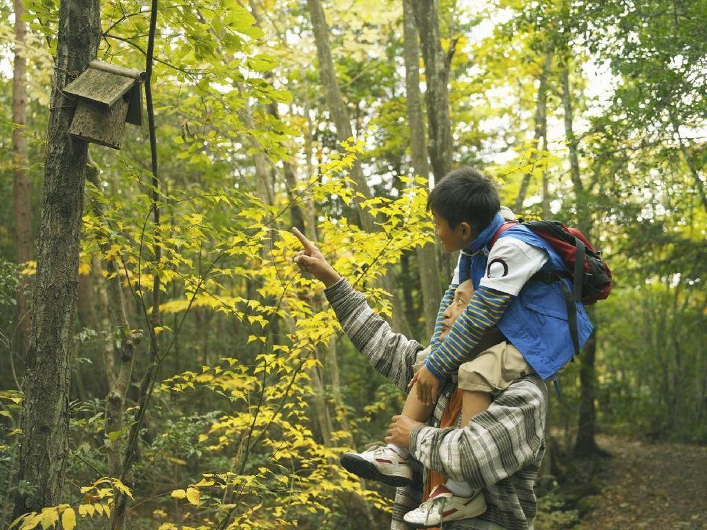 Rekreasi ke Hutan Banyak Manfaatnya buat Anak Lho
