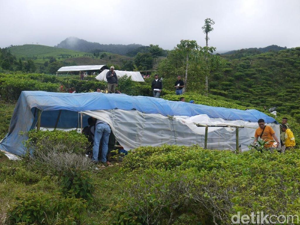 Potret Tenda Darurat Pengungsi Korban Gempa di Kebun Teh Bogor